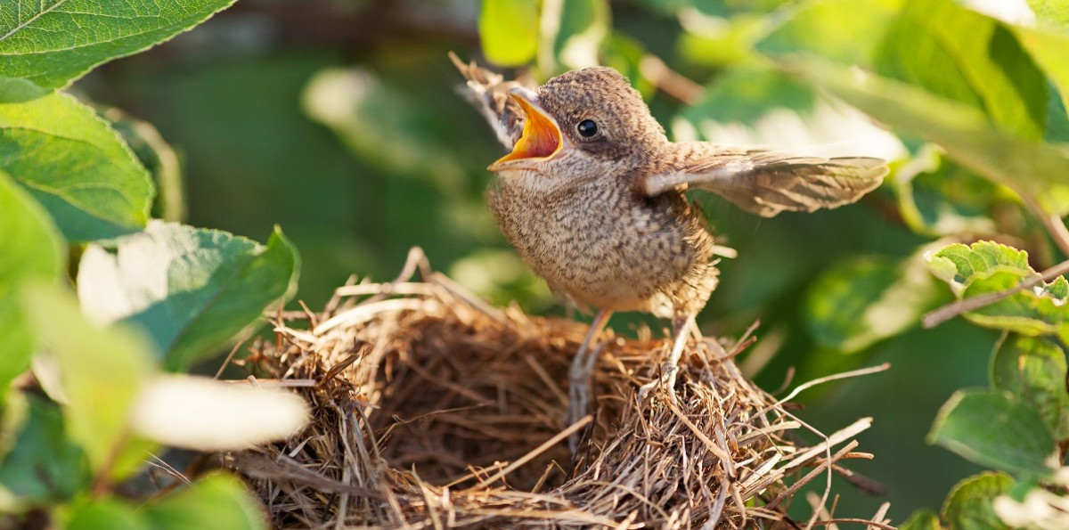 The Empty Nest: How to Thrive During this New Season of Life